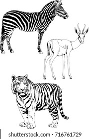 set of vector drawings on the theme of animals painted in ink by hand without a background
