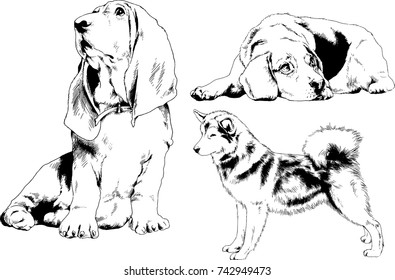 set of vector drawings on the theme of dogs of different breeds hand-drawn ink sketch