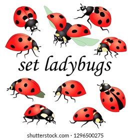 set of vector drawings, a picture of red beetles