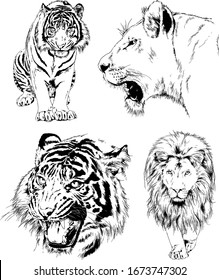 a set of vector drawings of various predators , tigers and lions, drawn in ink by hand, realistic for the logo