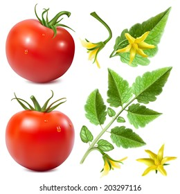 Set of vector elements for your design. Red ripe tomatoes with water drops,tomato leaves and tomato blossoms. Vector illustration.