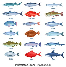 Set vector fish. Illustration seafood with bream, mackerel, tunny or sterlet, catfish, codfish and halibut. Cartoon icon tilapia, ocean perch, sardine, anchovy, shark, sea bass and dorado