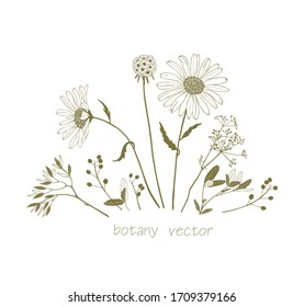 Set of vector graphic plants and flowers, close-up for design and invitations.