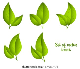 Set of vector green leaves isolated on a white background.