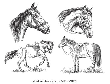 Set of vector hand drawing horses with bridle and saddle in black and white