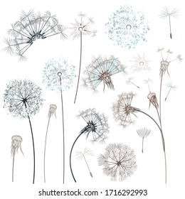 Set of vector hand drawn dandelions for design