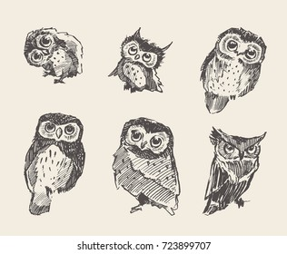 Set of vector hand drawn illustrations of owls, vintage style