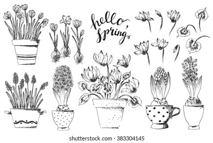Set of vector hand drawn line art bulb pot flowers and hello spring lettering. Spring hyacinth, grape hyacinth, crocus, cyclamen ink drawings for Easter decor, garden backgrounds, floral design.