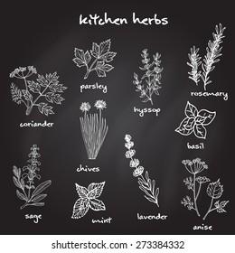 Set of vector hand-drawn fresh kitchen herbs