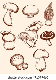set of vector  hand-drawn vintage mushrooms