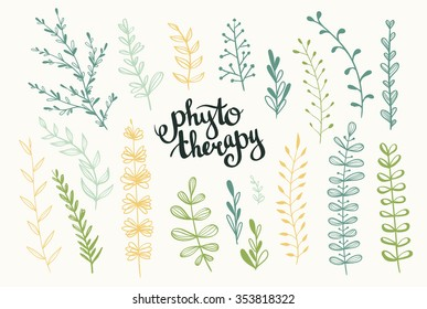 """Set of vector herbs. Phytotherapy background. Stylish lettering """"Phytotherapy""""."""