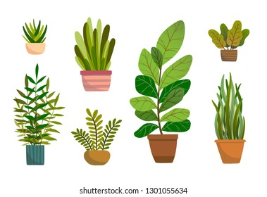 Set of vector house indoor plants, potted plants collection on white background. Flat colorful vector illustration