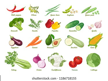 Set of vector icons vegetables. Chili, olive, bean, soybean, peas, broccoli, arugula, paprika, cucumber, garlic, eggplant, carrot, avocado, zucchini, corn, celery, onion, cauliflower, tomato, cabbage.