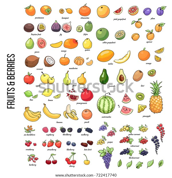 Set of vector illustration of juicy isolated outline colorful fruits and berries.