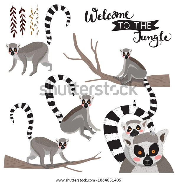 Set of vector illustration of lemurs. Lemur with baby, lemur on a tree, jungle lianas. Welcome to the jungle.