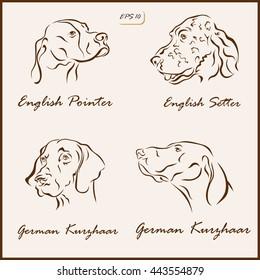 Set of a vector Illustration shows a dog breeds. English Pointer, English Setter, German Kurzhaar