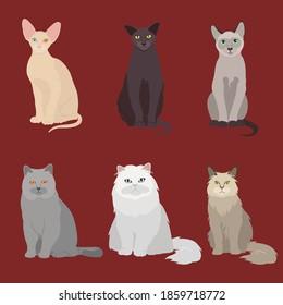 Set of vector illustrations cat cats white black gray Siamese, Sphinx