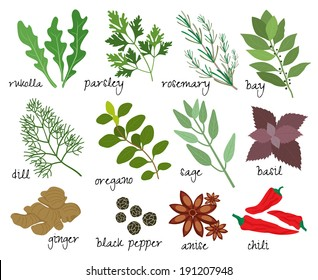 Set of vector illustrations of herbs and spices with sprigs of fresh rosemary  rocket  parsley  bay leaves  dill  oregano  sage  basil  root ginger  black peppercorns  anise and red hot chillies