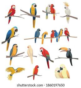 Set of vector illustrationsof parrots. Toucan, ara, parrot flies, parrots sit on a branch.