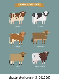 Set of vector images of six breeds dairy cows