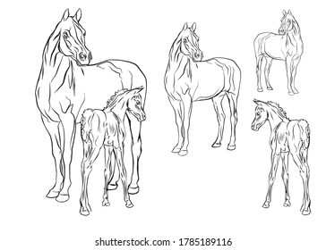 set of vector isolated monochrome hand-drawn images of a Mare with a foal of an Arab horse breed on a white background.