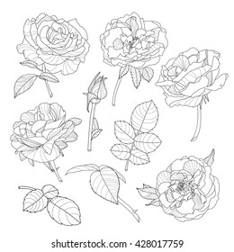 Set of vector isolated rose flowers. Black and white outline hand drawn rose flowers. Beautiful floral design elements.