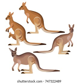 Set of vector kangaroo in various poses. Illustration isolated on the white background