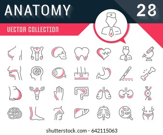 Set vector line icons, sign and symbols in flat design anatomy with elements for mobile concepts and web apps. Collection modern infographic logo and pictogram.