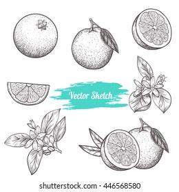 Set of vector oranges