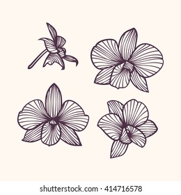 Set of vector orchids. Isolated orchids on a light background