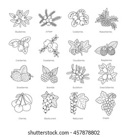 Set of vector outline doodle pied berries isolated on white