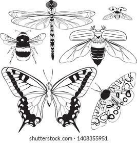 Set of vector vector pattern maixia beetle, ladybug, bumblebee