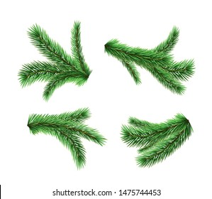 Set of vector realistic detailed fir branches isolated on white background. Christmas tree, spruce branches, pine.
