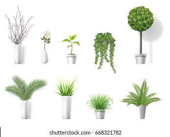 Set of vector realistic detailed house plant for interior design and decoration.
