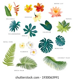Set of vector realistic tropical leaves and flowers with names isolated on white background. Monstera, hibiscus, plumeria. heliconia, coconut palm tree. Artistic botanical illustration. Vector EPS10
