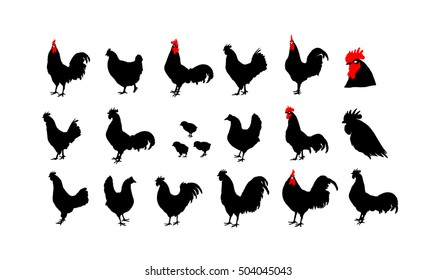 Set of vector rooster silhouettes on the white background. Can be use for Chinese calendar for the year 2017.