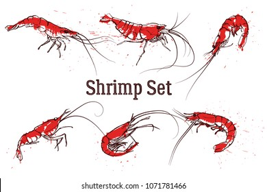 Set of vector shrimps illustrations drawn in ink. Splattered seafood concept on white background. Hand drawn boil prawn or shrimp. Text SHRIMP SET. Sketch vector set good for pub menu decoration