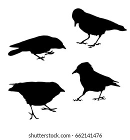 Set vector silhouette of a crow different poses, black color, isolated on white background