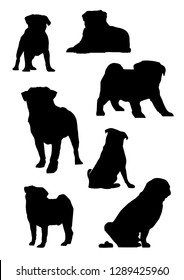 Set vector silhouette of the Pug dog, different poses, black color, isolated on white background. Lies, stands, sits, poops. Vector illustrations