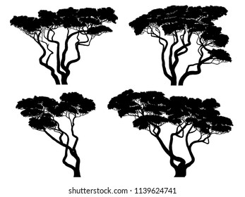 Set of vector silhouettes of African acacia trees.