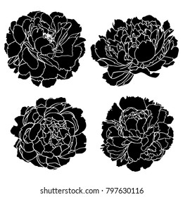 Set vector silhouettes of hand drawn peony flowers isolated