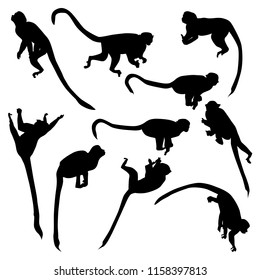 Set of vector silhouettes of monkeys saimiri sitting on branches in different poses isolated on white background