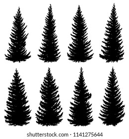 Set of vector silhouettes of old wild spruce trees (fir, fir-tree).