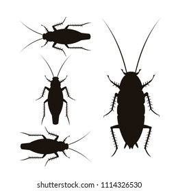 Set of vector silhouettes of oriental and german cockroaches. Illustration isolated on white background