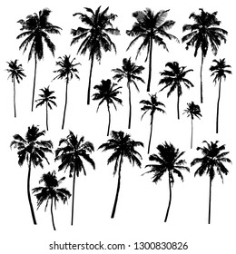 Set of vector silhouettes of palm trees of different shapes isolated on white background for your design
