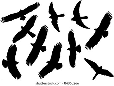 Set of vector silhouettes of raptors including kestrel, eagles and kite