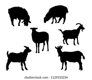 Set of vector silhouettes of sheep and goats