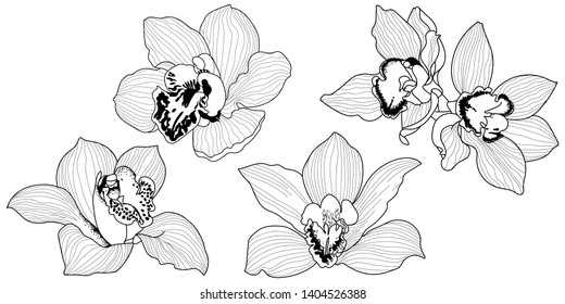 Set vector sketch of orchid flower.Vector tropical orchid flower. Floral botanical flower. Isolated illustration element. Vector wildflower for background, texture, wrapper pattern, frame or border.