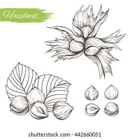 Set of vector sketches of nuts isolated on white background. Handmade hazelnut on branch and in the shell in vintage style