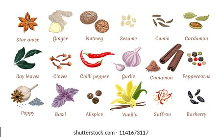 Set of vector spices isolated. Ginger, Nutmeg, Sesame, cumin, Cardamom, carnation, Chili, Garlic, Bay leaf, Peppercorns, Allspice, Basil, Saffron, Barberry, Star anise, cloves, cinnamon,  vanilla.